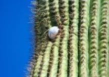 Vom Ball im Kaktus und dem Umgang mit Krokodilen – Kuriose Regeln auf dem Golfplatz
