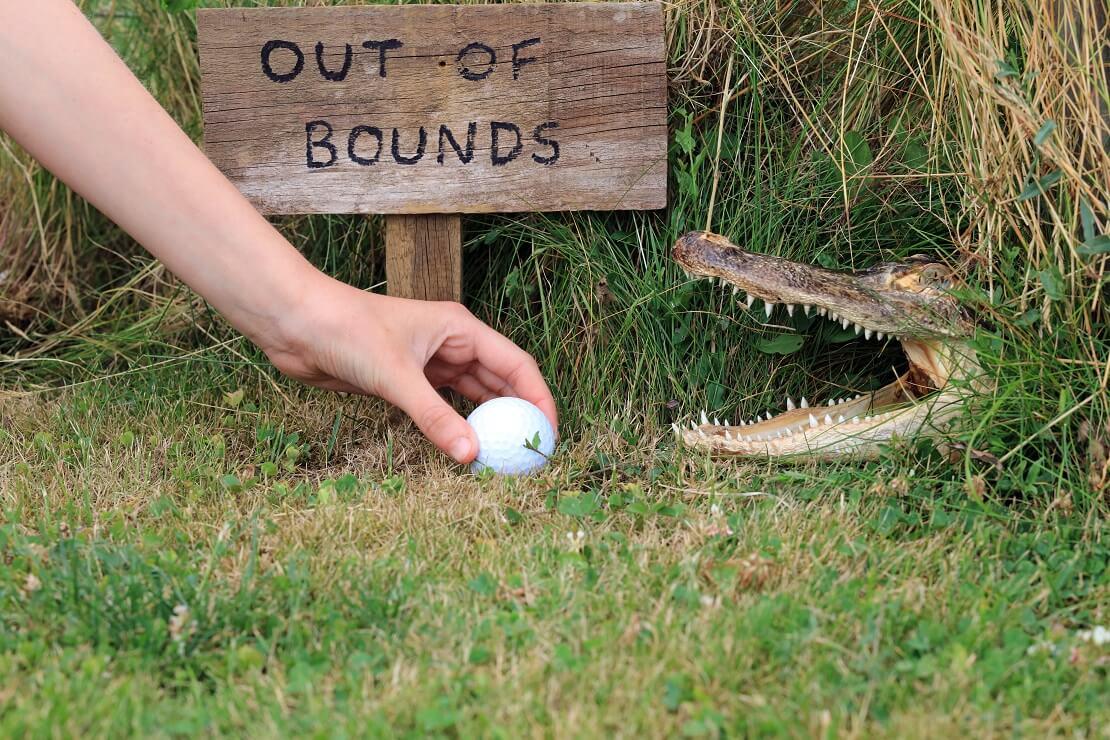 Ein Krokodil auf dem Golfplatz